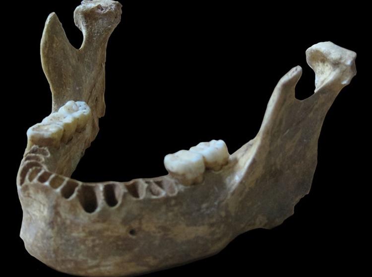 neandertal-ve-insan-uremesine-dair-ilk-kanit-bilimfilicom