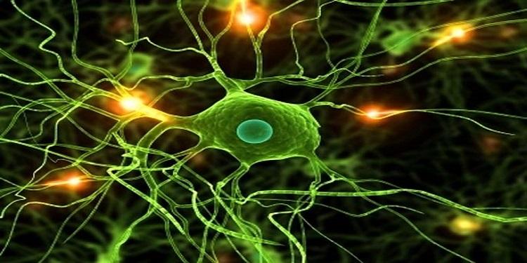 Nöron Oluşturan Kök Hücreler Bulundu