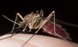Sivrisineklerin Hedefinde Olmanın Sebebi Vücut Kokumuzu Belirleyen Genler
