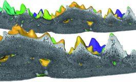 Unutulmuş Fosil, Dişlerin Kökenine İşaret Ediyor
