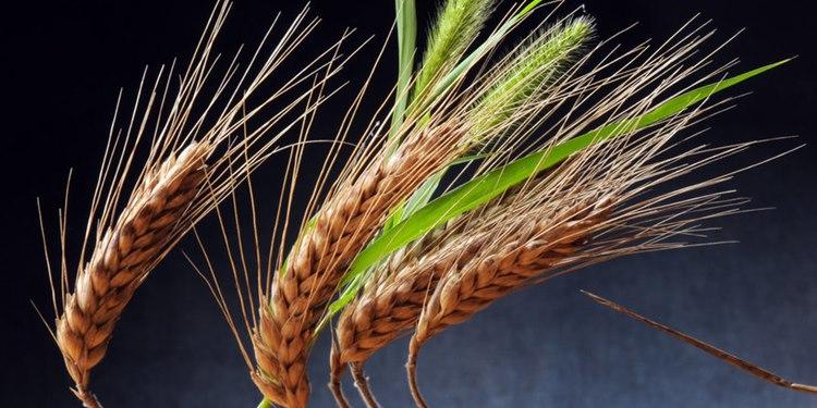 23,000 Yıl Önce Tarım Yapıldığına Dair Kanıt Bulundu