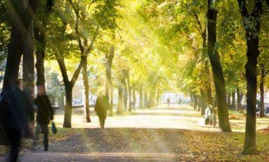 Ağaçlara yakın yaşamak sağlığı güçlendiriyor