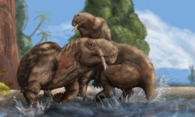 Permiyan dönem otçulunun dişleri tür kavgalarının kökenine dair fikir veriyor