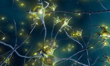 Beyin Mutasyonu ile Epilepsi ve Otizm İlişkisi