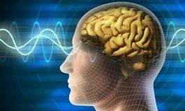 Beyin Yapısı Duyguları Düzenleyen Yeteneği Ortaya Çıkarıyor