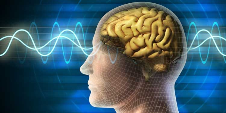 Beyin Yapısı, Duyguları Düzenleyen Yeteneği Ortaya Çıkarıyor