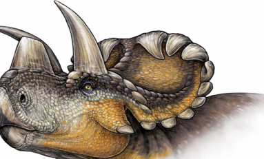Burun Boynuzu Evrimine Işık Tutan Yeni Bir Tür Keşfedildi