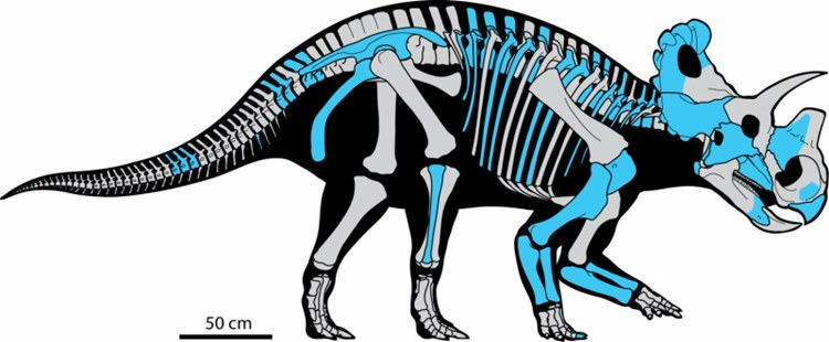 burun-boynuzu-evrimine-isik-tutan-yeni-bir-tur-kesfedildi2-bilimfilicom