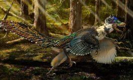 Çin'de yeni dinozor türü keşfedildi