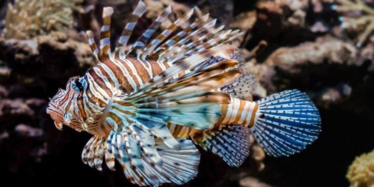 Dinozorlar yok oldu, balık çeşitliliği patladı