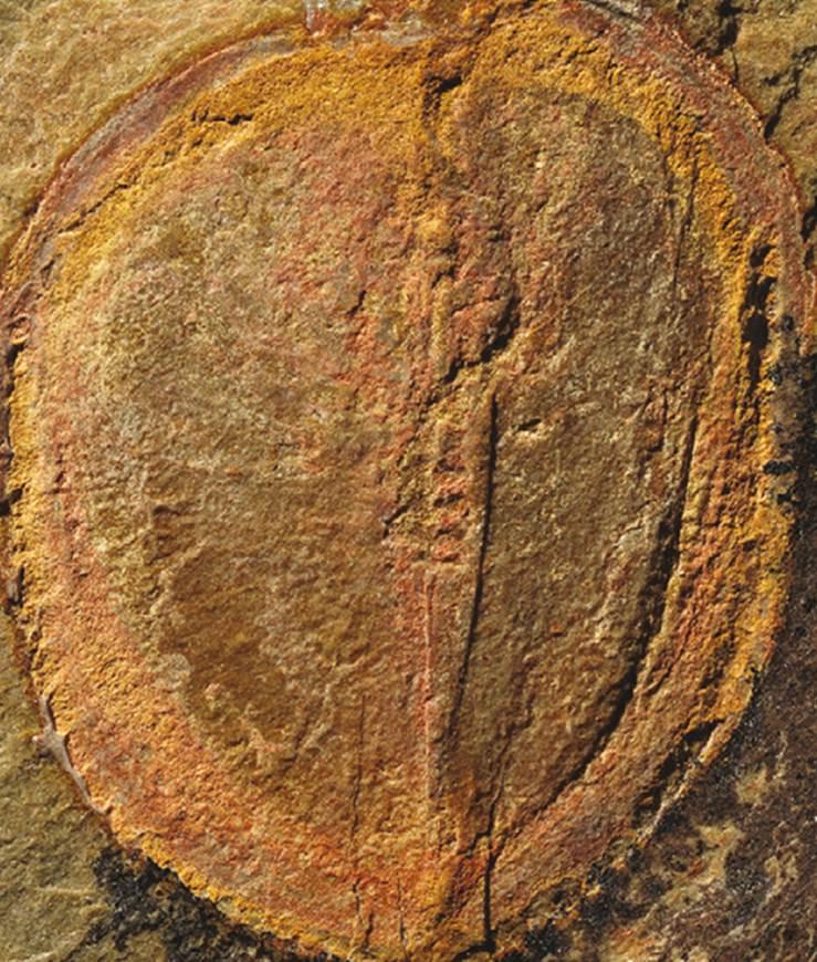 evrim-tarihini-degistirecek-fosil2-bilimfilicom