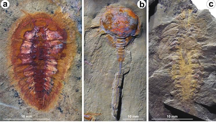 evrim-tarihini-degistirecek-fosil3-bişlimfifco