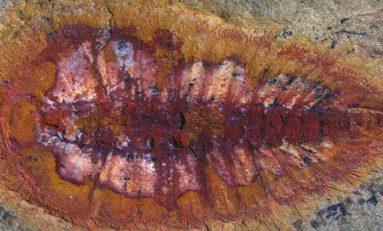 Evrim tarihini değiştirecek fosiller