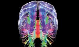 İki Mevcut İlaç Alzheimer'lı Farelerde Beyin Dejenerasyonunu Durdurabilir