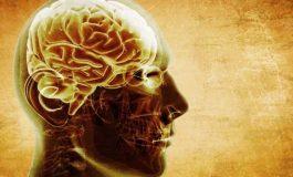 İnsan Beyin Organizasyonunun İdeale Yakın Olduğu Bulundu