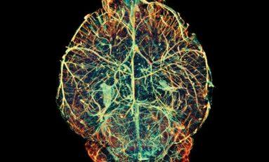 20 milyar nanoparçacık elektriği kullanarak beyinle iletişim kuruyor