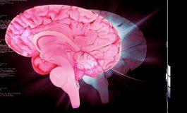 Primatlarda ve Kemirgenlerde Beyinden Beyine Bağlantı Kuruldu