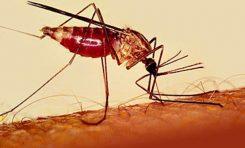 Sıtma'ya Karşı Yeni Silah
