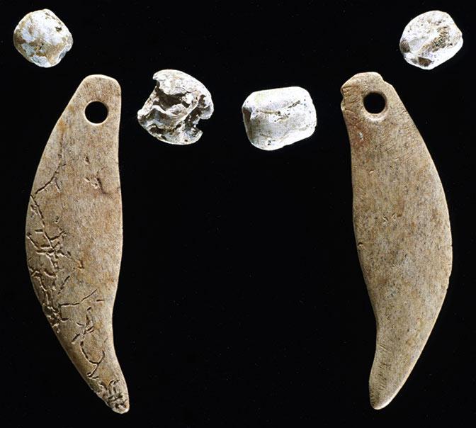 Vaşağın yanında bulunmuş ayı dişleri ve deniz kabukları