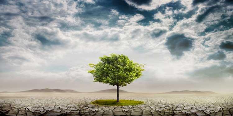 Toprak Kirliliği Bazı Bitkilere Fayda Sağlıyor Olabilir!