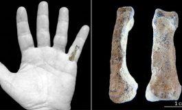 El Kemiği Fosili, 'Modern' Elin En Az 2 Milyon Yıl Önce Var Olduğunu Gösterdi!