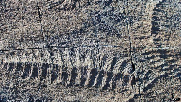 fractofusus-fosili-bilimfili