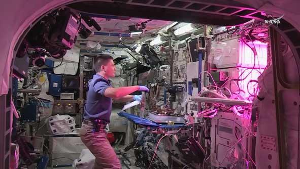 Canlı yayında marulun toplanması (NASA TV)