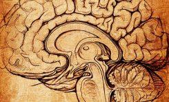 İnsan Yapımı İnsan Beyni