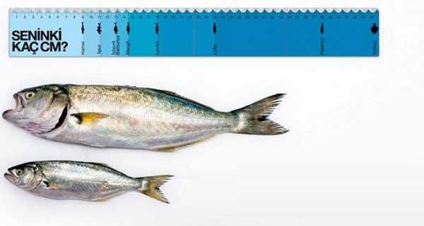 Boyut bir şekilde önemli ama bizim düşündüğümüz şekilde mi? – (Belli bir uzunluğun altındaki balıkların avlanmaması gerektiğini vurgulayan bir görsel)