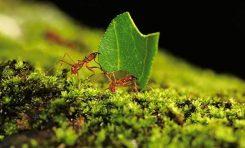Söz Konusu Vücut Kokusu ise Karıncalar Bu İşte Uzman
