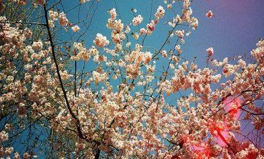 Renk Algımız Mevsimlere Göre Değişiyor
