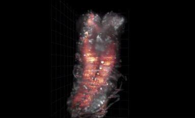 Sinek Larvası Beyin Aktivitesi Görüntülendi