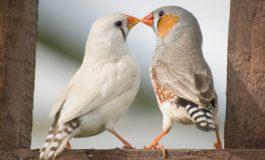 Aşkın Evrimsel Önemi