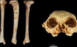 1.3 Milyon Yaşında Maymun Fosili
