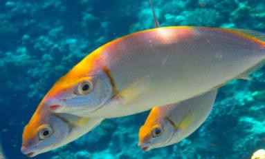 İlginç Bir Gerçek, Balıklar da Birbirleriyle Yardımlaşıyorlar!