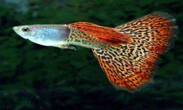 Çevresel Değişimler Hızlı Evrime Sebep Olabilir!