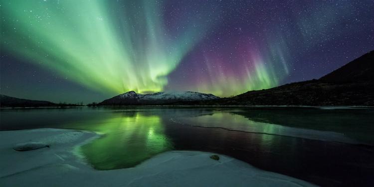 Düşünülenin Aksine, Karanlık Kutup Kışlarında Hayvanlar Uyumuyorlar!