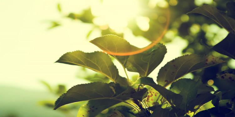 Gelecekte Benzin ve Doğalgaz Yapay Bitkilerden Üretilebilir