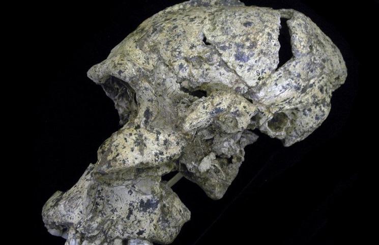 kafatasının yandan görünüşü -