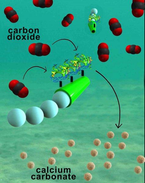 karbondioksiti-donusturebilen-mikromotor-gelistirildi-bilimfiliocm