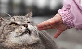 Kediler, İnsanlara Düşündüğünüzden Çok Daha Az Bağlılar