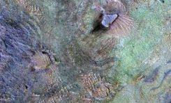 Mars Atmosferine Ne Oldu?