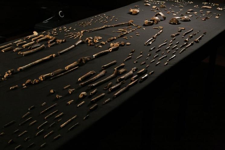 'Bu bir anatomik mozaik' John Hawks