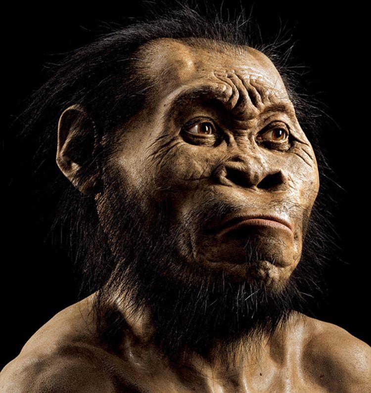 Homo Naledi muhtemelen böyle görünecekti - National Geographic Society