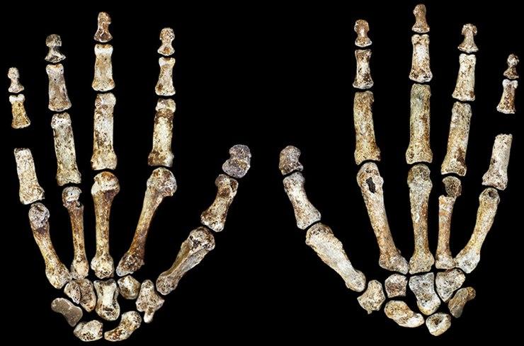 Homo Naledi'nin elleri