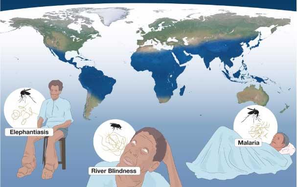 Mavi Hat: Bahsi geçen hastalıkların görüldüğü yoksul insanlar coğrafyası.