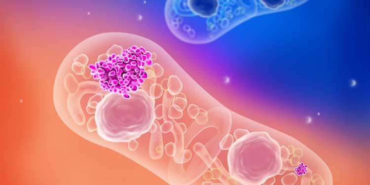 Biyokimyacılar Hücresel Hafıza Mekanizmasının Yapısını Çözmeyi Başardı