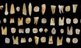 Çin'de Bulunan Dişler, Afrika'dan Daha Erken Ayrıldığımızı Gösteriyor