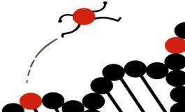 Gezici Genlerin Protein Ürettikleri Keşfedildi