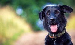 Kadim Dostumuz Köpek ile İlk Tanışmamız